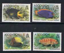 ASCENSION 1980 REEF FISH