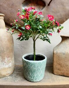 Artificial Potted Pink Rose Tree, Realistic Small Green Plant, Faux Houseplant