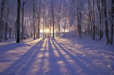 Christmas Hiver Shiro SCENE Light Up Fibre Optic DEL Canvas/Picture 40 x 30 cm