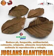 100 HOJAS JUGLANS AILANTIFOLIA uso como almendro indio terminalia catappa gambas