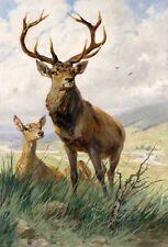 Oil painting wild animals deer - Nice loving couple Stag and doeHand painted