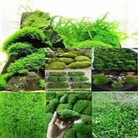 Natural Moss Live Water Grass Really Aquatic Plant Fish Tank Aquarium Plants