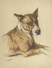 Colored Bull Terrier - Vintage Dog Art Print - 1938 Kf Barker