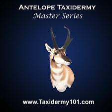 Learn Antelope Taxidermy on DVD for Beginners - Taxidermy DVD