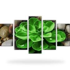 Steine Tropfen Natur Pflanze Bild Bilder Wandbild Kunstdruck 5 Teilig