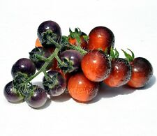 Blue Berries Tomato Seeds Sweet Beautiful Indigo Blueberry Heirloom Free Ship