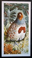 Grey Partridge     Vintage Illustrated Card   VGC