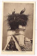 strasbourg , nid de cigogne --