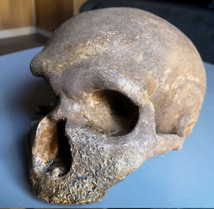 MOULAGE FOSSILE crane Néandertal Guattari Circeo skull hominid Fossil Schädel