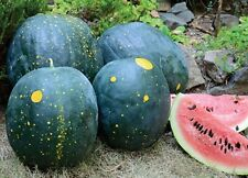 10 Watermelon Seeds MOON AND STARS-Red Flesh-Heirloom Spotted Fruit-Rare