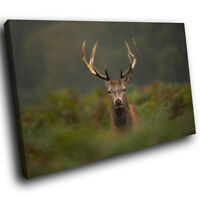 Stag Deer Green Grass Brown Funky Animal Canvas Wall Art  Picture Prints