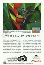 CANON EOS-1N CAMERA Original 1994 Vintage Print Ad - South American Hummingbird