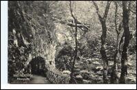 BAD BERTRICH ~1910/20 AK Partie a.d. Käse-Grotte Baum