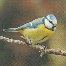 Serviette PAPER+DESIGN - Cute blue tit (33 x 33 cm)