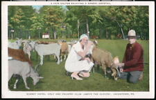 UNIONTOWN PA Summit Hotel Golf & Country Club Woman With Goats Vintage Postcard