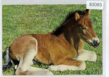 B5083cgt Horse Foal Australia NSW Woodburn NSW Greetings postcard