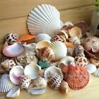 Nautical Decor Beach Mixed Natural Shell And Conch Home Party Decor