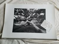 Vintage BRUCE DAVIDSON Martha's Vineyard Tree Poster Lithograph photo chilmark
