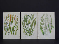 Anne Pratt Botanical, c.1899, Original Color, 3 Prints! English #07