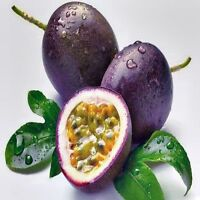 COMMON PASSIONFRUIT SEEDS PASSIFLORA EDULIS EDIBLE FRUIT 20 SEED PACK