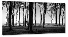 Leinwand Bild Leinwand Bild Ostsee Strandwald Buche Wald Buchenwald Schwarzweiß