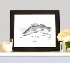 ZANDER Predator Fishing Fish Art Drawing Print Picture MOUNTED Pikeperch
