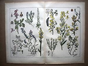 36...planche..botanique..plantes..fleurs...1872