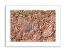 La ciencia Arqueología Dickinsonia Ediacaran biota Fossil lona impresiones artísticas