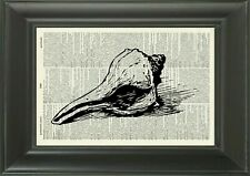 ORIGINAL - Conch Art Print - Vintage Dictionary Page Shell Art Print 195KLD