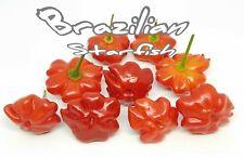 (25+) Brazilian Starfish Pepper Seeds