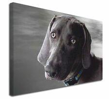 More details for weimaraner dog  x-large 30