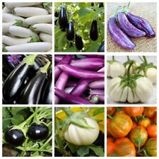 100Pcs Eggplant Vegetable 10 Kinds Solanum melongena 10 Kinds Organic Plants