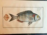 1st EDITION BLOCH OBLONG FOLIO H/C RARE FISH - GILT HEAD - #266