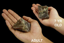 """Red Agate & Green Opal 2"""" 3-6 Oz Raw Rock Mineral Root Chakra Crystal Specimen"""