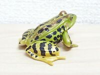 Kaiyodo Choco Q 10 AMERICAN BULLFROG frog toad figure Chocoq animatales