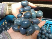 5 SEED RARE Mountain Serdang Palm Edible fruit as food Exotic plant fresh seed