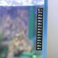 Digitales Flüssigkristall Klebe   Thermometer für Aquarium L5N8