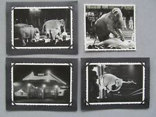 Zirkus Aeros in Nordhausen Elefant   4  x  orig. seltene große Fotos 1956
