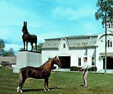 Morgan Horse Farm UoV apprentice Weybridge Middlebury Vermont Vintage Postcard