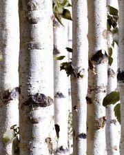 Galerie Bluff abedul árbol forestal efecto Vinilo Luxuryweight Wallpaper j21517