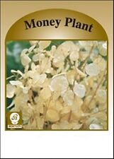 Flower Seed Packets, Money Plant, 50 Pkg - Marketing Advertising Promotion