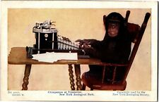 Chimpanzee at Typewriter New York Zoological Park Vintage Postcard Q20