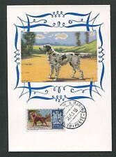 SAN MARINO MK 1956 HUNDE DOGS IRISH SETTER CARTE MAXIMUM CARD MC CM d7670