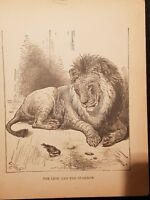 Antique Book Print  - The Lion And The Sparrow- 1894