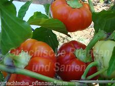 Ungarische Apfel-Paprika ** Paradiesapfel ** rot 10 frische Samen Balkon Kübel