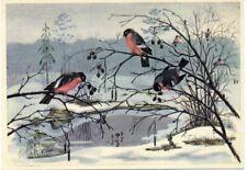 1959 Bullfinches Birds Rare Russian Unposted  postcard