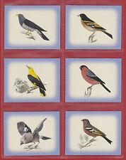 GDS  CARDS  -  SET  OF  L 20  EUROPEAN  BIRDS  CARDS  -  2007