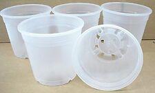 Clear Plastic Pot for Orchids 6 inch Diameter - Quantity 5