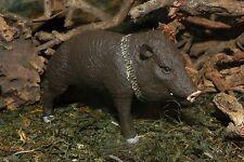 Safari Peccary Pig Mammal Animal Figurine Wild Life