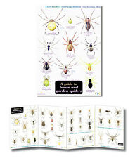 Guide House & Garden Spiders Laminated Identification Chart Field Guide Poster